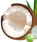 Fractionated Coconut Oil MCT